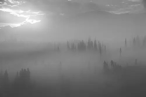 Spruce forest in fog