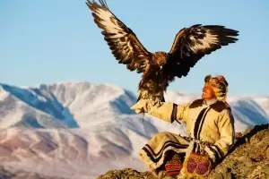 A golden eagle hunter with his eagle in the mountains
