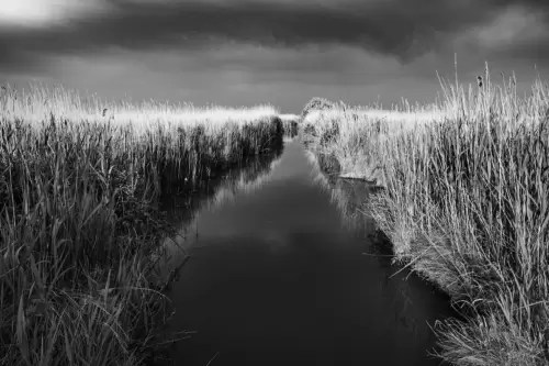 "Canal with reed grass at lagoon ""Etang du Vaccares"", Camargue, France"