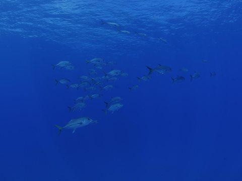 shoal of fish in blue ocean waters
