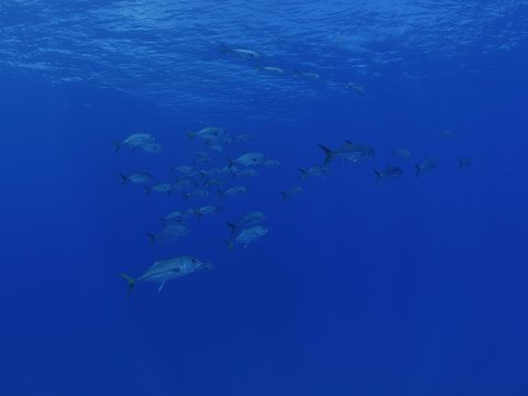 shoal of fish in blue ocean waters