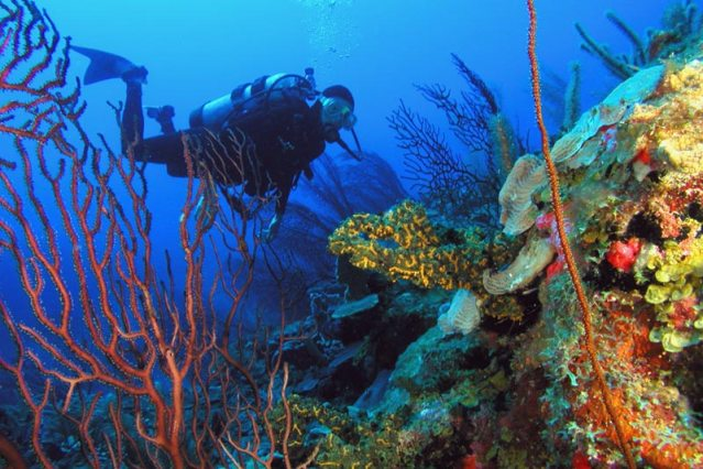 marine park diver with colorful coral