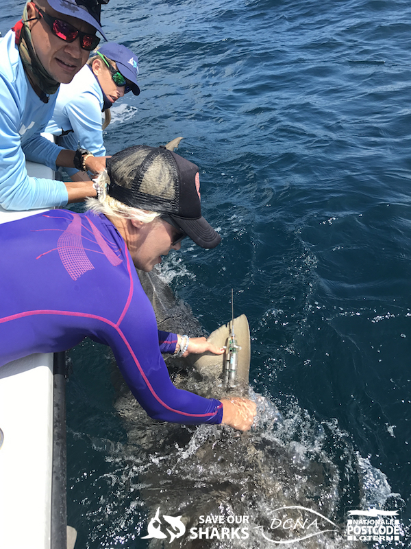 shark tagging from a boat
