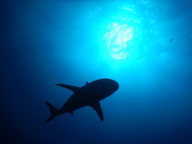 shadow of shark from below