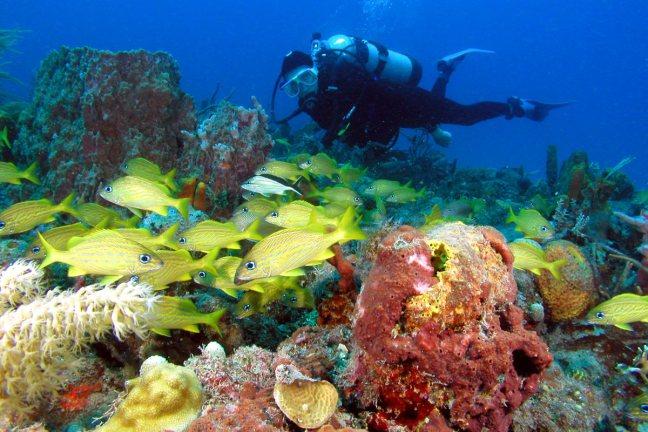 diver at coral reef