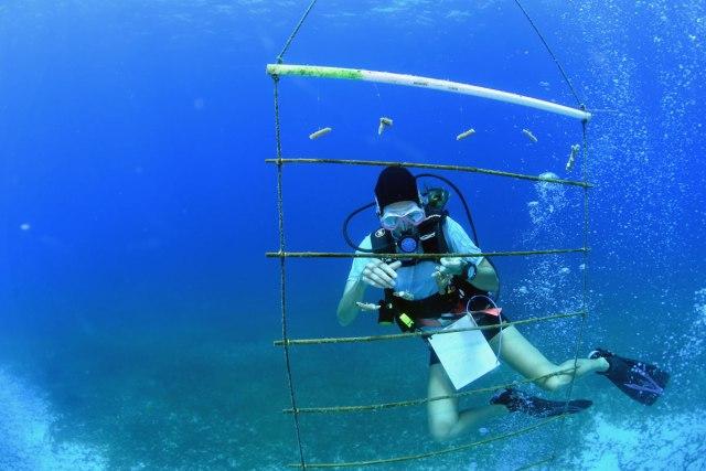 diver at coral nursery