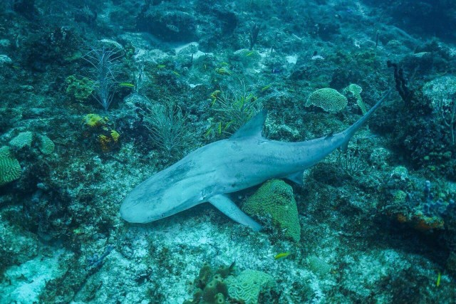 dead shark on coral reef