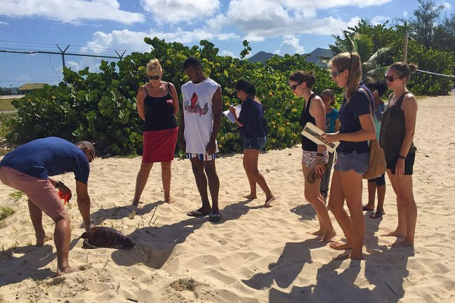 people watching a sea turtle on beach
