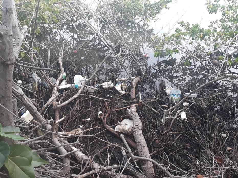plastic stuck in mangrove trees