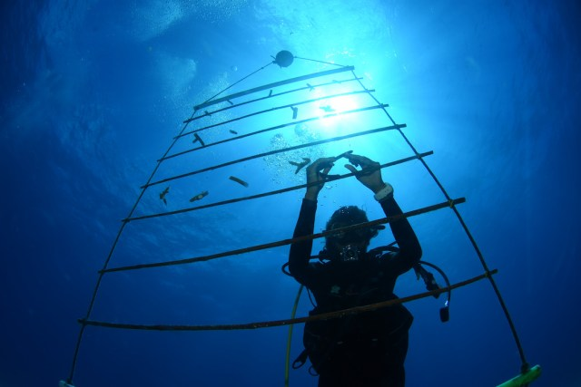 coral nursery ladder