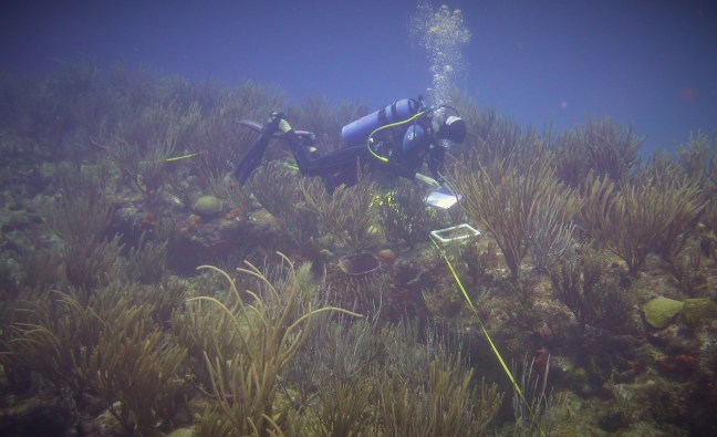 diver with tape measure in coral reef