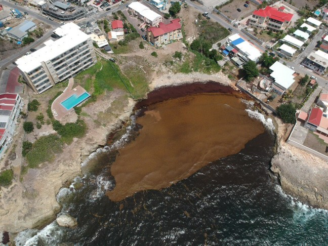 sargassum seaweed washing up, drone image