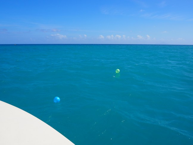 Plastic balloons on the ocean near St Maarten