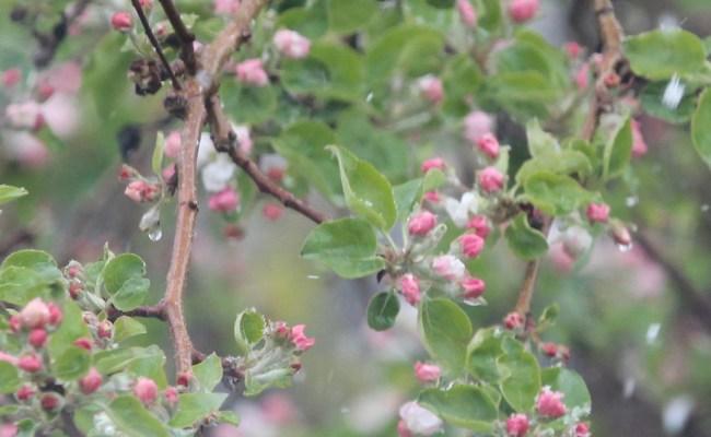 Beacon Apple Nature Garden Life