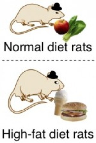 http://icanhasscience.com/wp-content/uploads/2010/10/Rat-dads-and-their-diets-e1287977097515.jpg