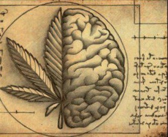 endocanabinoid-system-brain-and-cannabis-receptors