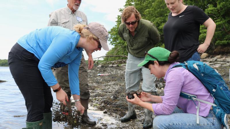 algae monitoring on great