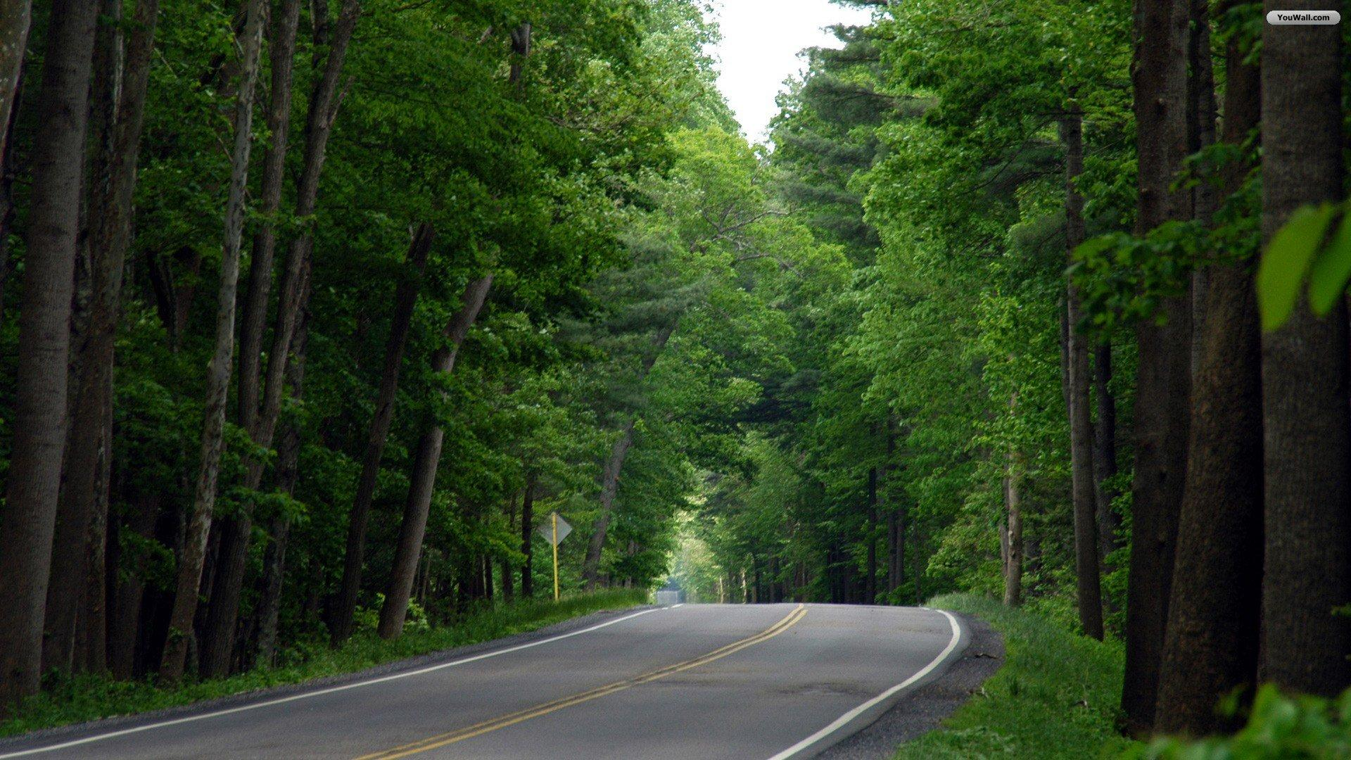 Road Over Forest Hd Wallpapers Windows 8 Perfect Hd