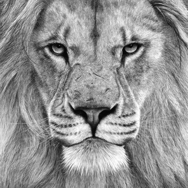 Charcoal & Pencil Drawing - Nature In Art