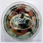 Arrangement of Seashells 4 - Common British Saddle Oyster shell showing iridescent nacreous inner layer - in a bowl of water on small coloured pebbles.