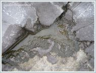 Shallow pool in Carboniferous Limestone with acid etching on the margins