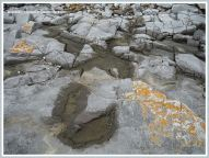 Shallow pools in Carboniferous Limestone with acid etching on the margins