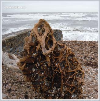 Lyme Regis Driftwood 1