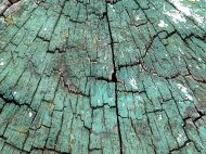 Cross-section through weathered timber post