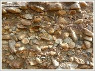 Close-up of pebble conglomerate exposed in the sea cliff of raised beach deposits at Neptune State Park in Oregon, USA