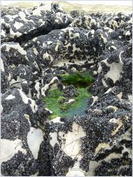 Small hollow in the karstic rock surface filled with water and bright green algae