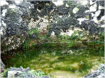 Small algae-filled pool surrounded by a patchwork of small seashore creatures encrusting the rock
