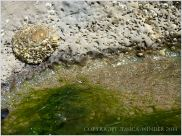 Close-up of marine worm burrows in limestone at the waterline of a rock pool on Burry Holms