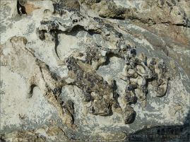 Texture, colour, and pattern in Silurian rock strata with weathered surface sculpturing on the beach at Ferriters Cove