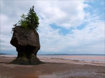 """""""Flower Pot"""" sea-stack at Hopewell Rocks in New Brunswick, Canada."""