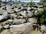 Boulders with mangrove aerial roots on Four Mile Beach at Port Douglas in Queensland