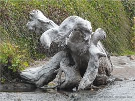 Driftwood resembling seated baby elephant at Yachats, Oregon.