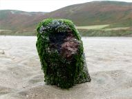 View looking across the shore towards Rhossili Down with a stump of a wooden post, with embedded iron thought to be shrapnel, belonging to an unidentified structure on Rhossili beach