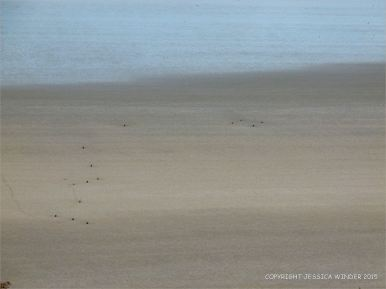 Looking down onto the sandy beach with stumps of wooden posts belonging to an unidentified structure on Rhossili beach