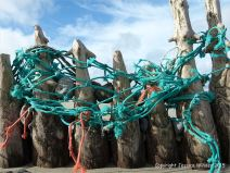 Old timber posts of a beach groyne entangled with fishing net