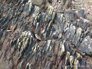 Devonian red sandstone strata with black lichen on the seashore