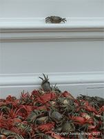 Ai Weiwei porcelain river crab installation He Xie at the Royal Academy of Arts in London