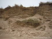 Sand dune erosion at Whiteford Sands on the north Gower coast in South Wales