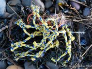 Piece of blue and yellow fishing net flotsam