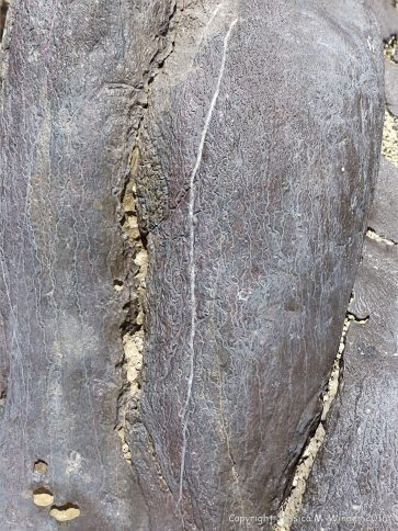 Surface erosion patterns on Carboniferous Limestone at Little Tor, Gower, South Wales.