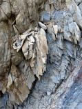 Carboniferous period sedimentary rocks belonging to the Cumberland Group at Spencer's Island, Nova Scotia, Canada.