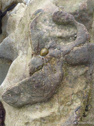 Limestone on the Worms Head Causeway