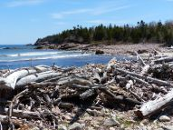 Large driftwood piled high on the banks of the Black Brook estuary