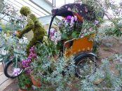 Rickshaw in the Princess of Wales Conservatory at Kew gardens