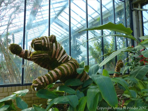 Tiger in the Princess of Wales Conservatory at Kew Gardens