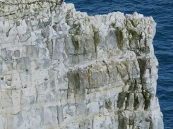Chalk pattern and texture in cliffs at Studland Bay